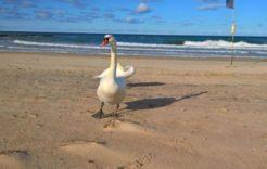 Więcej o: Wrzesień 2019 na plaży…